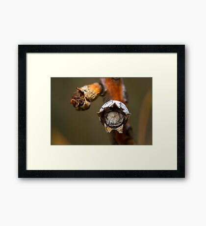 The Furry Seed Framed Print