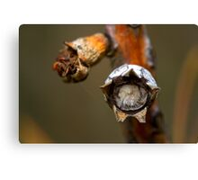 The Furry Seed Canvas Print
