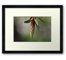 Spring Awaits! Framed Print