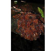 Tremella species? Photographic Print