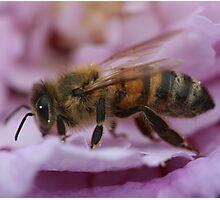 Bee April 2011 Photographic Print