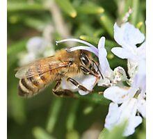 Bee Aug 2011 Photographic Print