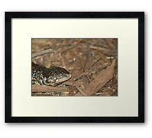 Sleepy Lizard Framed Print