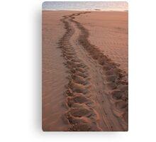 Turtle tracks Darwin Canvas Print