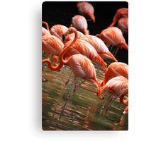 Caribbean Flamingoes Canvas Print