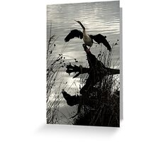 Time to Reflect, Cormorant drying wings Greeting Card