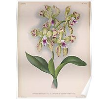 Iconagraphy of Orchids Iconographie des Orchidées Jean Jules Linden V15 1899 0186 Poster