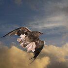 Raptor Whistle by byronbackyard