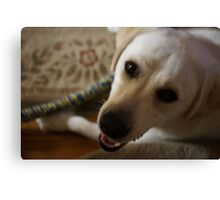 Handsome Lab Canvas Print