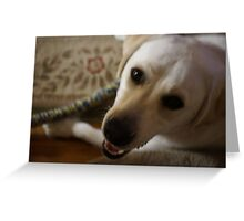 Handsome Lab Greeting Card
