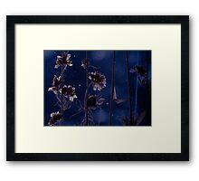 Flowers in the dark Framed Print