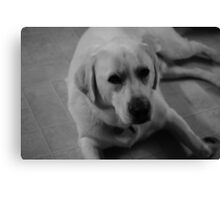 Black & White Labrador dog Canvas Print