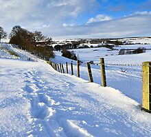 Winter Fields - County Durham. UK by David Lewins