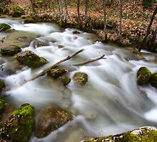 Creek in the forest at fall by Willy Vendeville