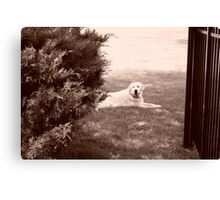 Country dog Canvas Print