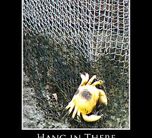ZooTips: Hang in There by Angie Dixon