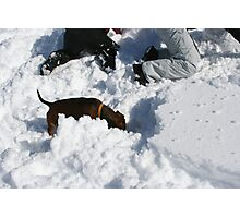 THE AVALANCHE-RESCUE-DACHSHUND Photographic Print