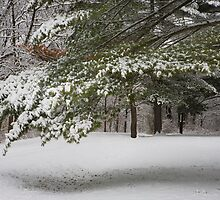 First Snow of the Season - With a story of Perserverance by Adam Bykowski