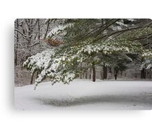First Snow of the Season - With a story of Perserverance Canvas Print