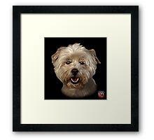 West Highland Terrier Mix - 8674 Framed Print