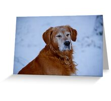 Frosted contemplation Greeting Card