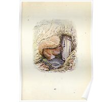 The Tale of Squirrel Nutkin Beatrix Potter 1903 0029 A House Full a Hole Full Poster