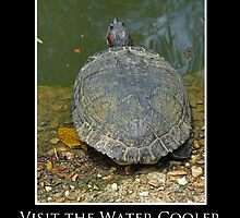 ZooTips: Visit the Water Cooler by Angie Dixon