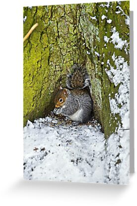 Grey Squirrel with its Food Store by Rod Johnson