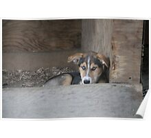 Future Sled Dog Poster
