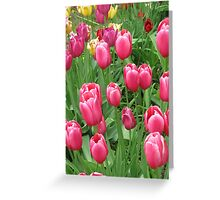Spring Time Floral Tulips Galore photograph Greeting Card