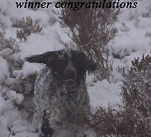 joint winners banner spaniels by David Ford Honeybeez photo