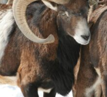 Awesome Mouflon Sticker