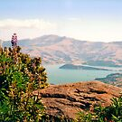 Looking down on the Banks peninsula by apple88