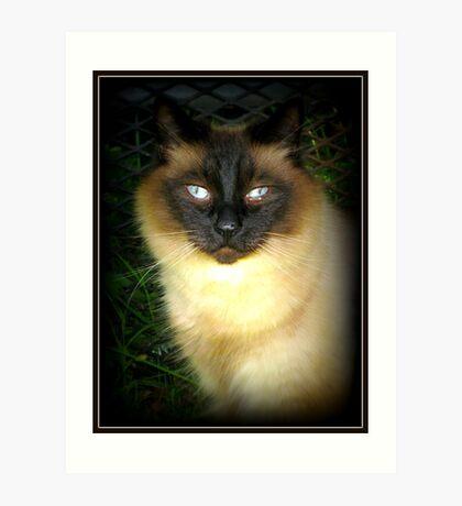 Zeus Cat Art Print