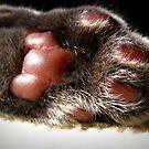 Kitty Paw by AngieBanta