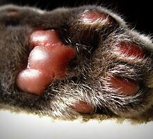 Kitty Paw by AngieBanta