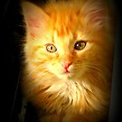 Orange Kitten by Angie O'Connor