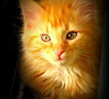 Orange Kitten by AngieBanta
