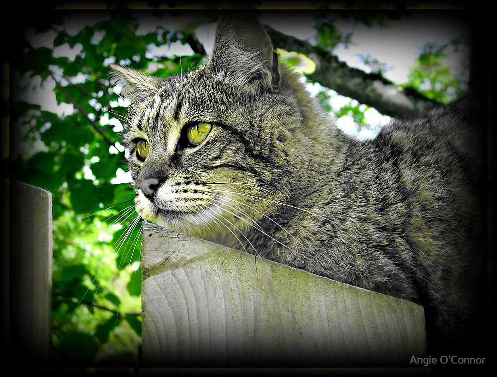 Tiger Kitty on The Fence by Angie O'Connor