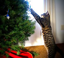 Kitty Decorating Her Tree by AngieBanta