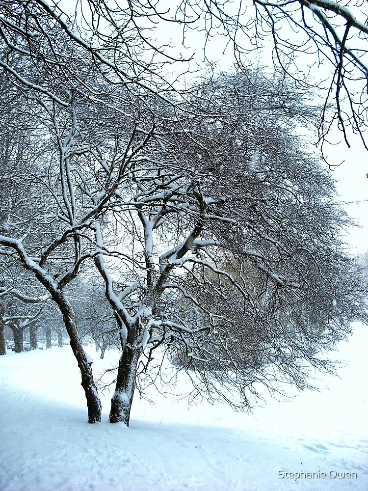 Snow coated branches by Stephanie Owen