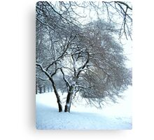 Snow coated branches Metal Print