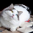 My Turkish Van Cat by Zoe Marlowe