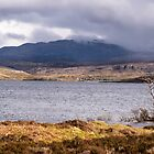 Lone tree at Loch Assynt, Assynt, Scotland by Cliff Williams