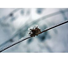 Iced Branch Photographic Print