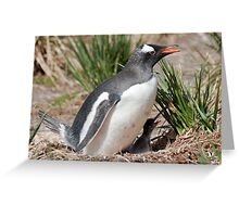 Gentoo Penguin and chick Greeting Card