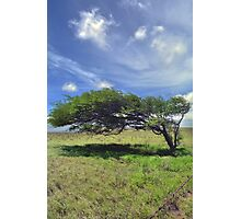The Wind Swept Tree Photographic Print