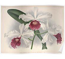 Iconagraphy of Orchids Iconographie des Orchidées Jean Jules Linden V8 V9 1895 0012 Poster
