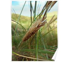 Marram Grass - Freshwater West, Pembrokeshire Poster