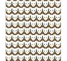 White Cats Photographic Print